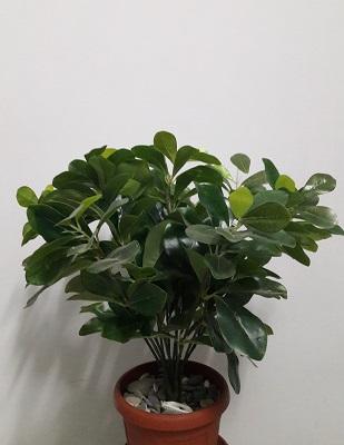 Денежное дерево 12вет.Н=45см. Д6056