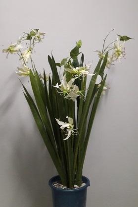 Орхидея кустовая Н=86см. Д4806