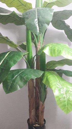 Пальма «Банан» 3 мохн.ствола Н=220см. Д1440