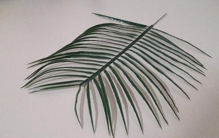 Ветка пальмы королевской «Гигант» Н-50см Б/С В2182