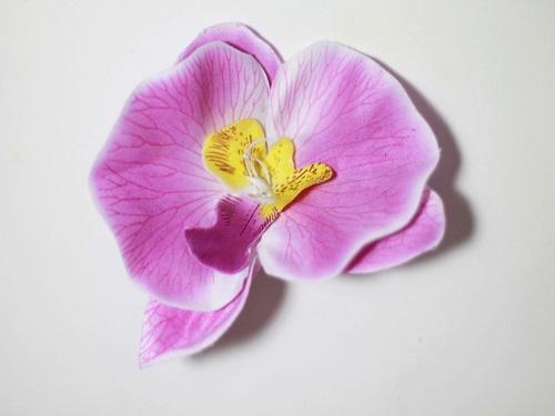 Орхидея «Ваниль» d-13см Б/С  Г86